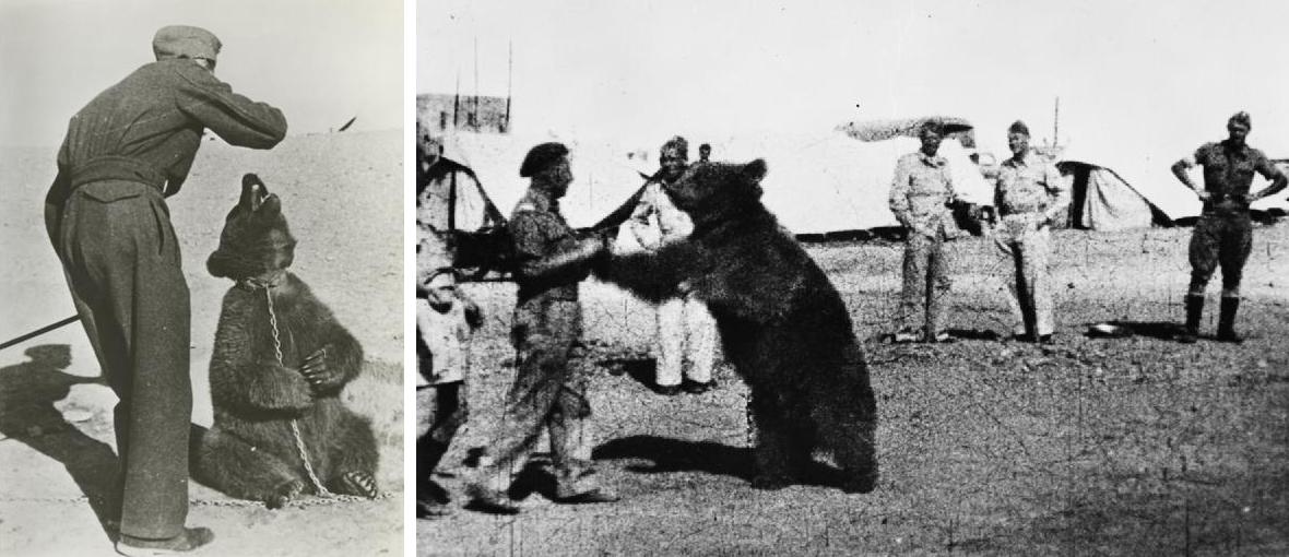 7054bec8fa7ded Niedźwiedź Wojtek stał się maskotką polskich żołnierzy, co - zdaniem  obrończyni praw zwierząt - oznaczało