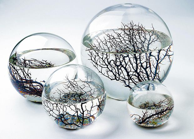 Ecosphere - zamknięte akwarum, którego mieszkańcy egzystują w perfekcyjnej harmonii, żywiąc się i oczyszczając swoje środowisko.