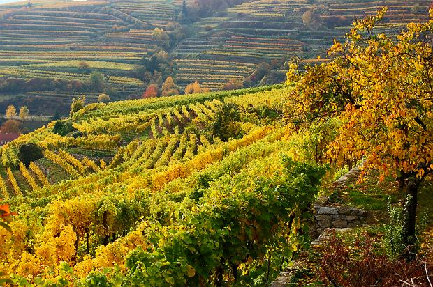 Enoturystyka - podróże szlakiem wina