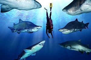 Shark Attack Experiment LIVE - nurkowanie z rekinami NA ŻYWO. Już dzisiaj w nocy! [ZWIASTUNY]