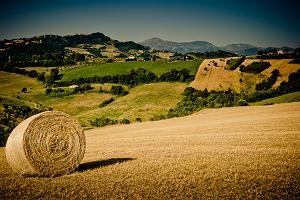 Włochy. Le Marche, czyli Włochy bez turystów