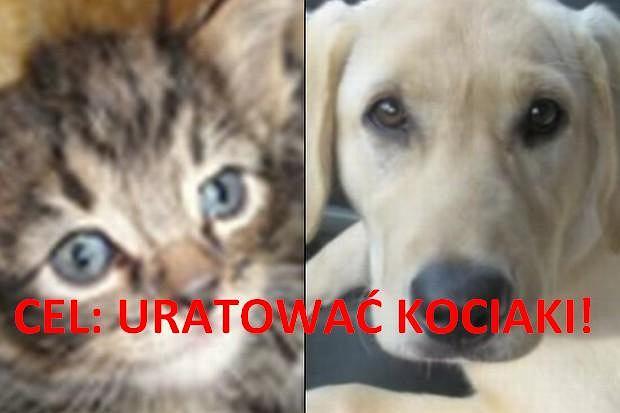Dwa koty zostały uratowane przez labradora, który zabrał je z drogi.