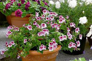 Sadzenie roślin w pojemnikach na balkonach i tarasach