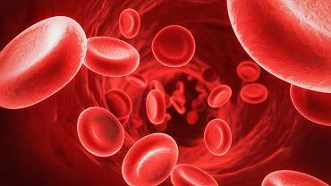 Krew składa się z osocza oraz z ciałek czerwonych (czyli erytrocytów), białych (leukocytów) i płytek krwi (trombocytów)