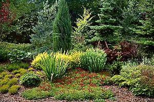 Rośliny odporne na suszę