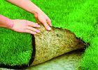 Trawnik z rolki bez ryzyka