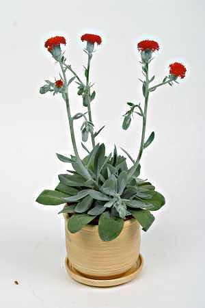 Rośliny domowe, na które trzeba uważać
