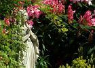 Jak uprawiać miniaturowe różaneczniki