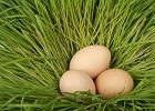 Jaja na wszystkie sposoby