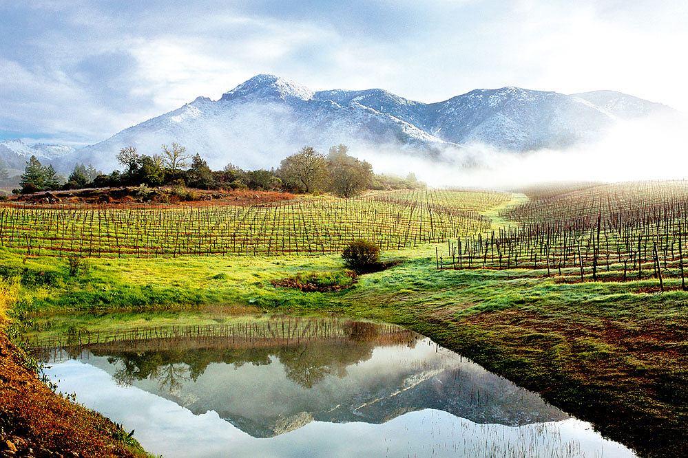 wina z Kalifornii