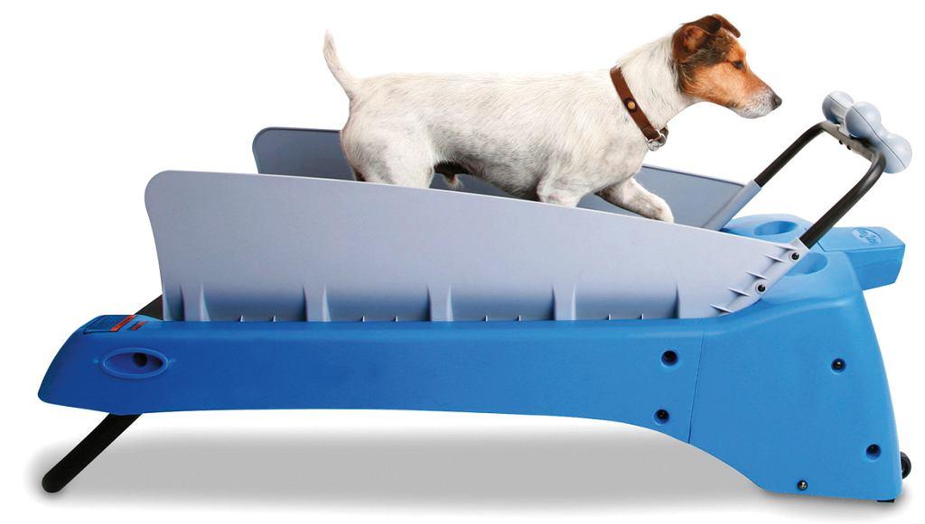 Bieżnia dla psa Canine Treadmill