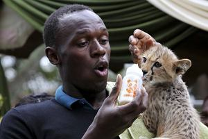Olympic and world sprint champion Usain Bolt of Jamaica feeds a three-month old male cheetah cub at the Kenya Wildlife Service (KWS) headquarters in Kenya's capital Nairobi November 2, 2009. Bolt adopted the cheetah cub named