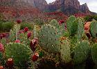 Dieta kaktusowa - rewolucja w odchudzaniu czy kolejny chwyt marketingowy?