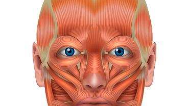 W twarzy człowieka znajduje się około 70 mięśni