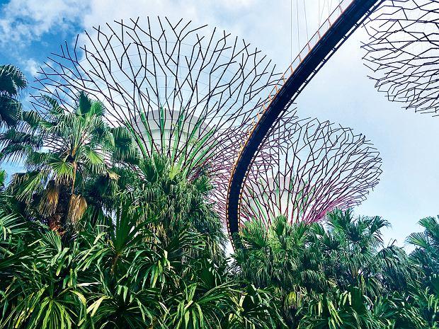 Wielkie stalowe drzewa -pionowe ogrody - nowy symbol Singapuru