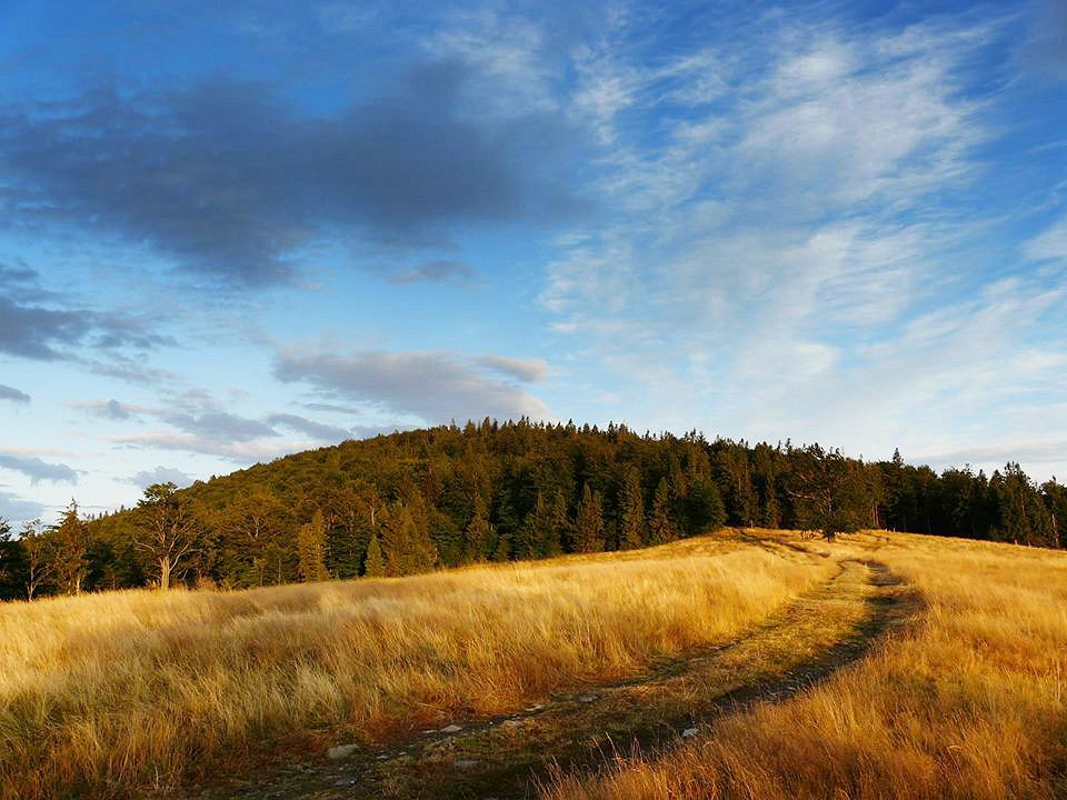 Zdjęcie numer 2 w galerii - 25 hektarów lasu w Beskidach uratowane. Jego miejsce miał zająć ośrodek narciarski
