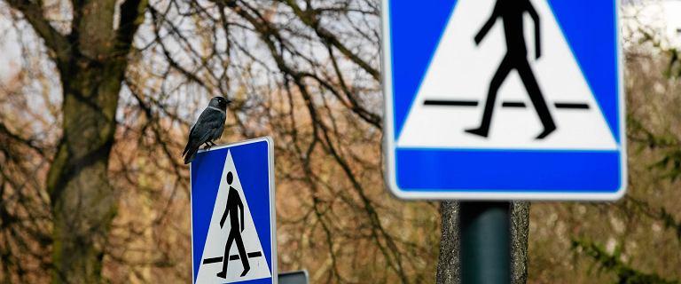 Poseł PiS wnioskuje o odblaskowe znaki drogowe. Sęk w tym, że one już takie są