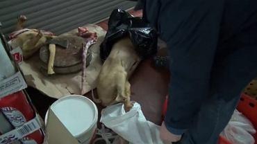 Mięso niewiadomego pochodzenia znalezione przez Straż Graniczną w Wólce Kosowskiej pod Warszawą