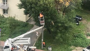 Wymiana oświetlenia przy ul. Kaliskiej w Sosnowcu