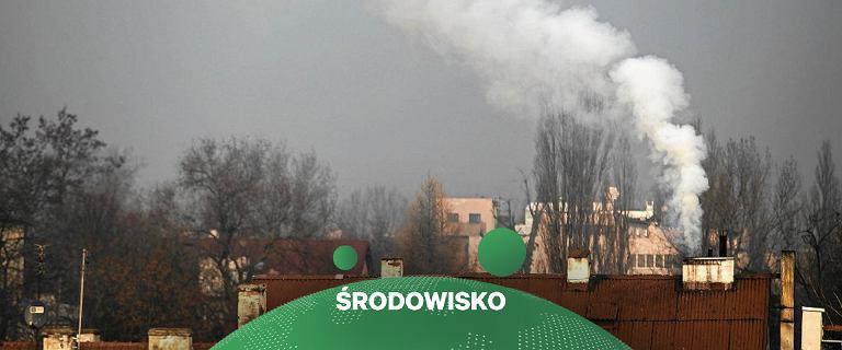 Smog. Małopolscy przedsiębiorcy skontrolowani. 90 proc. pali w piecu śmieciami