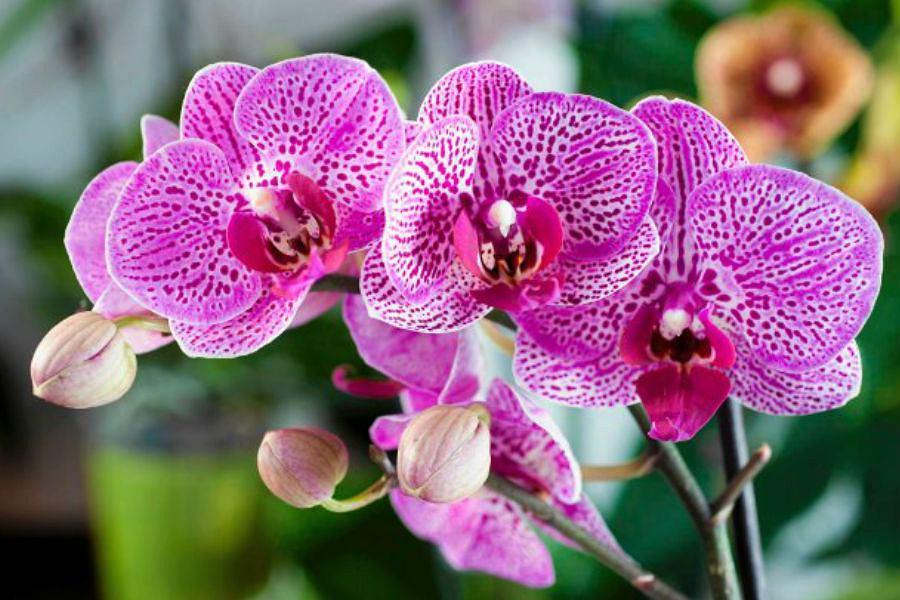 Najpiękniejsze kwiaty doniczkowe