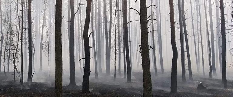 Pożar w Cieksynie może objąć 40 ha lasu. Zagrożone domki letniskowe