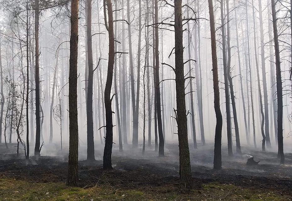 Pożar w Cieksynie, może objąć 40 hektarów lasu. Zagrożone domki letniskowe i budynki mieszkalne