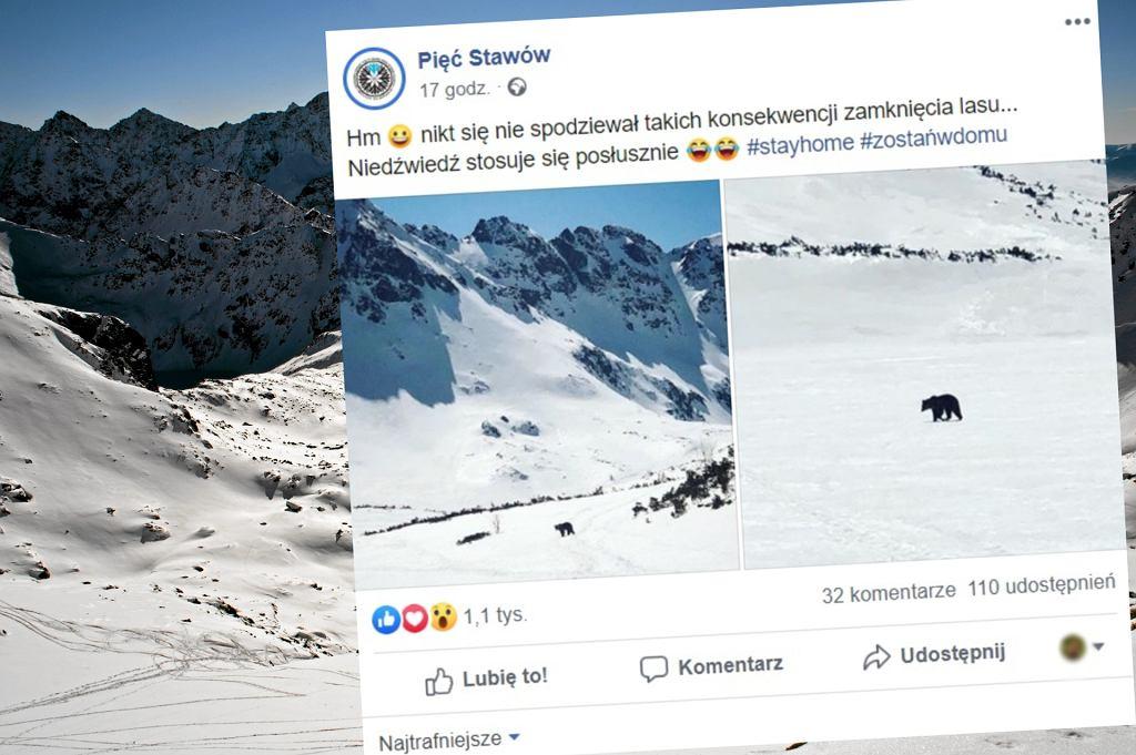 Niedźwiedź spaceruje po Dolinie Pięciu Stawów Polskich