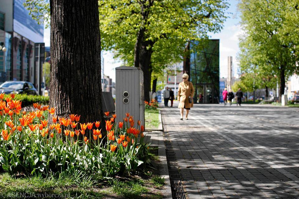 Zdjęcie numer 3 w galerii - Przy betonowej alei kwiatowej  wyrosły kwiaty. Tulipany o niezwykłych barwach
