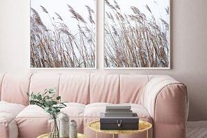 Trawa pampasowa: dekoracyjna roślina do ogrodu i wazonu