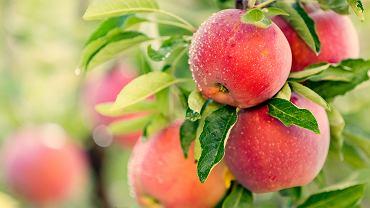 Ceny jabłek wysokie jak nigdy. Taniej kupimy banany. Dlaczego jabłka są drogie?