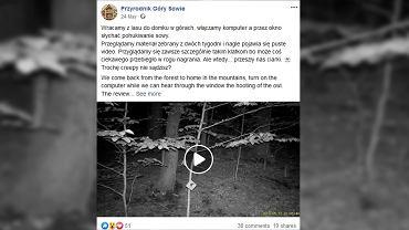 Przyrodnicy z Gór Sowich zarejestrowali na nocnym nagraniu coś niebywałego.