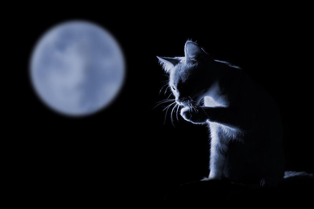 Czy koty widzą w ciemności? Zdjęcie ilustracyjne