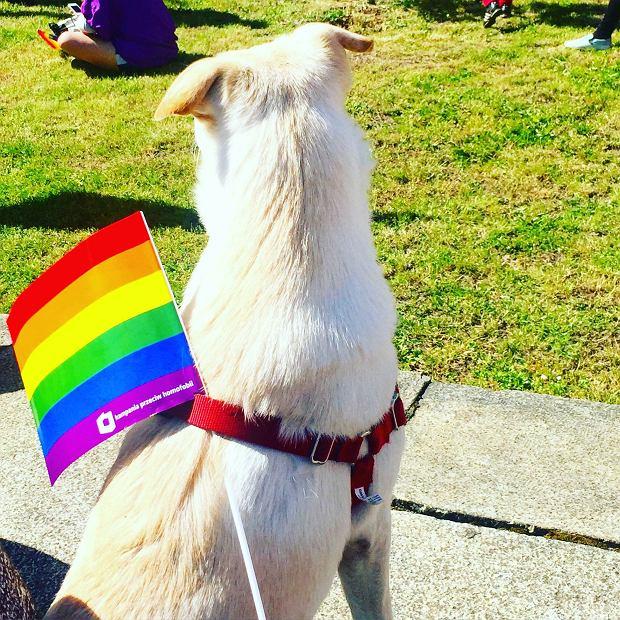 Na Paradzie Równości