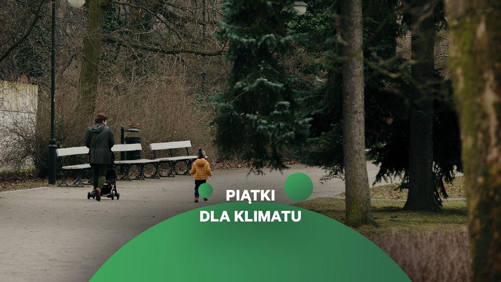 Drzewa w Warszawie 'zarabiają' milion w tzw. usługach ekologicznych