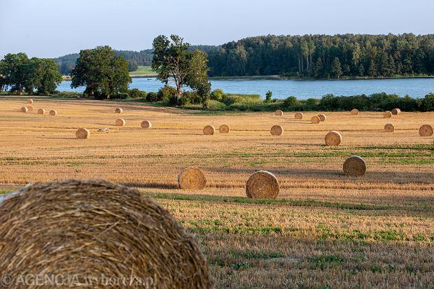 Ziemia nie tylko dla rolników. Czy będzie łatwiej kupić lub sprzedać ziemię?