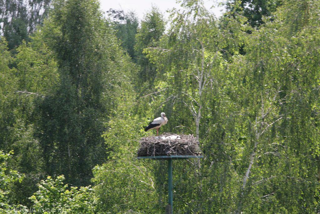 Rekordowo było 36 zasiedlonych gniazd