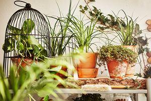 Jak urządzić ogródek na balkonie? Te akcesoria przydadzą się niezależnie od wybranych roślin