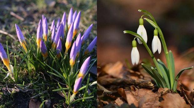 Jakie Kwiaty Kwitna Wiosna Blog Inspirowani Natura