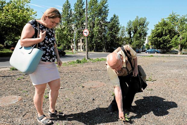 Ekolożka o miejskich łąkach: Możemy odpuścić koszenie. Wrócą owady, ślimaki, wróble i jeże