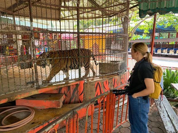 Mariana van Zeller odwiedza tygrysie zoo na obrzeżach Bangkoku w Tajlandii (fot. National Geographic)