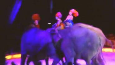 Słonie w cyrku 'Krone'