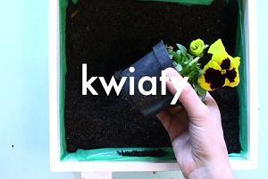 Jak zasadzić kwiaty w drewnianej skrzyni