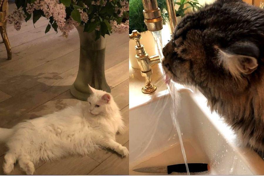 Koty Maryli Rodowicz