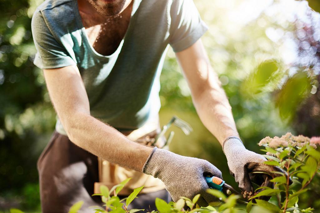 Sprzęt ogrodniczy to spory wydatek. Taniej go wypożyczyć