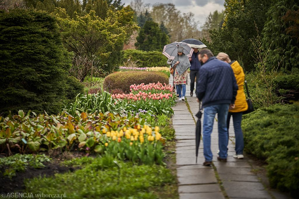 Wiosna w ogrodzie botanicznym w Łodzi (zdjęcie ilustracyjne)