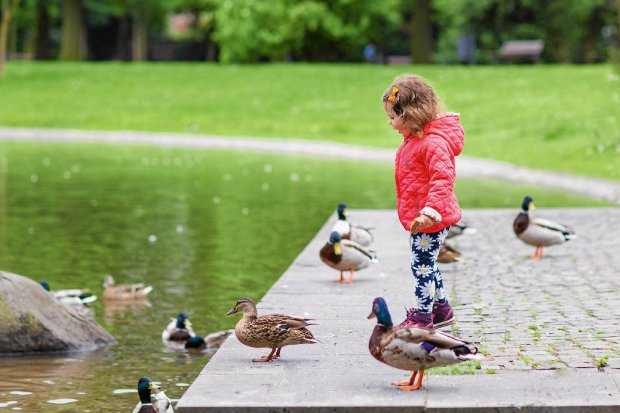 Adorable little girl feeding ducks at summer, in park SLOWA KLUCZOWE: animal bird bread casual caucasian child childhood cute ducks eat emotion family farm feed forest fun geese girl green happy hat help hungry jacket kid lake life nature outdoor outside park people recreation river shore siblings small smiling spring summer throw toddler water young youth