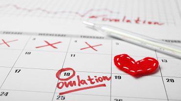 Test owulacyjny diagnozuje moment w trakcie cyklu miesiączkowego, kiedy kobieta ma owulację. Zdjęcie ilustracyjne