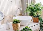 Sztuczne rośliny do łazienki - dlaczego są najlepszym wyborem?
