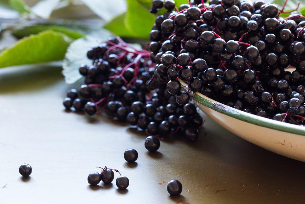Czarny bez jest składnikiem wielu preparatów zielarskich